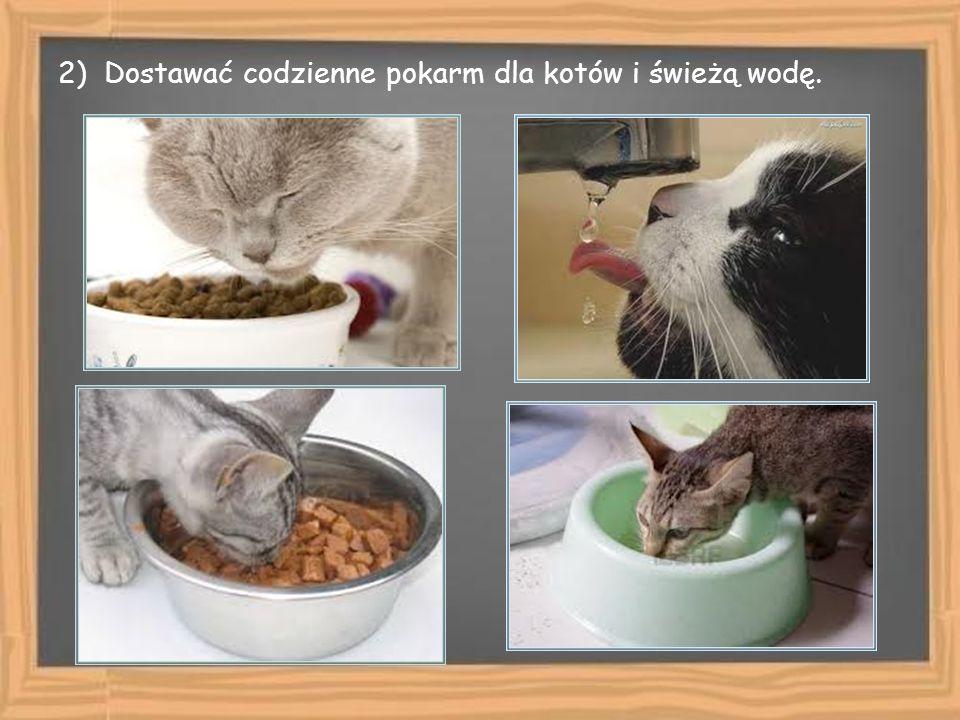 2) Dostawać codzienne pokarm dla kotów i świeżą wodę.