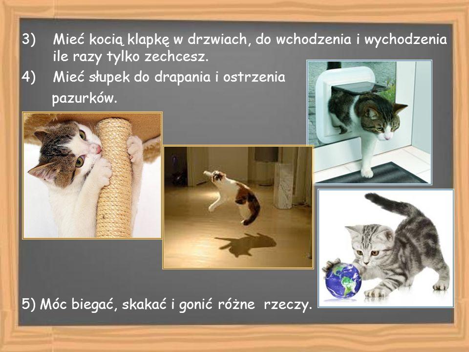 3)Mieć kocią klapkę w drzwiach, do wchodzenia i wychodzenia ile razy tylko zechcesz. 4)Mieć słupek do drapania i ostrzenia pazurków. 5) Móc biegać, sk