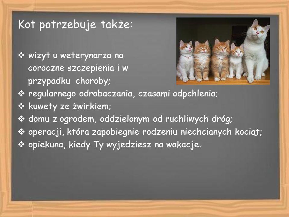 Kot potrzebuje także: wizyt u weterynarza na coroczne szczepienia i w przypadku choroby; regularnego odrobaczania, czasami odpchlenia; kuwety ze żwirk