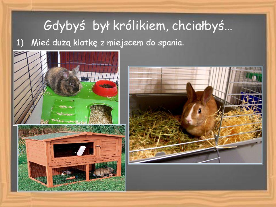 Gdybyś był królikiem, chciałbyś… 1) Mieć dużą klatkę z miejscem do spania.