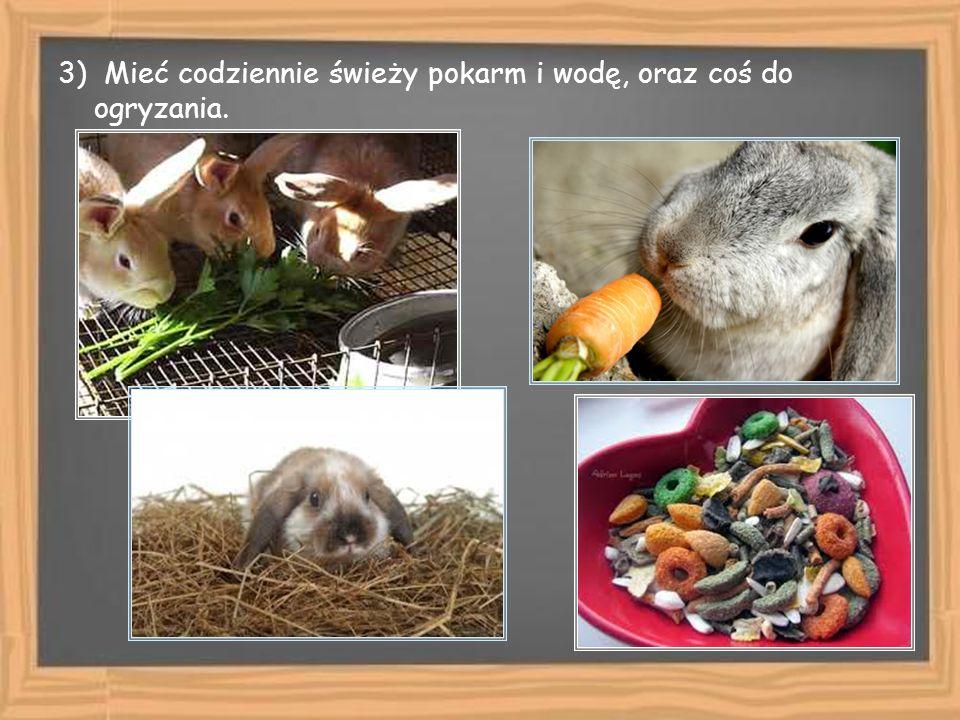 3) Mieć codziennie świeży pokarm i wodę, oraz coś do ogryzania.