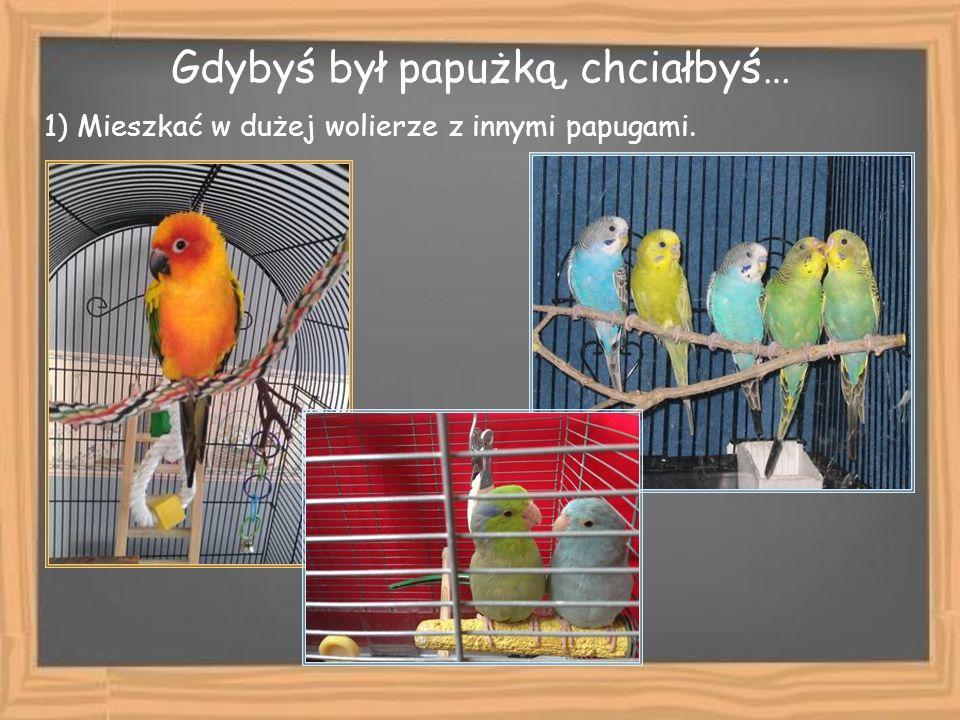 Gdybyś był papużką, chciałbyś… 1) Mieszkać w dużej wolierze z innymi papugami.