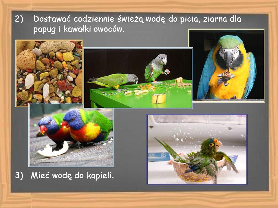 2)Dostawać codziennie świeżą wodę do picia, ziarna dla papug i kawałki owoców. 3) Mieć wodę do kąpieli.