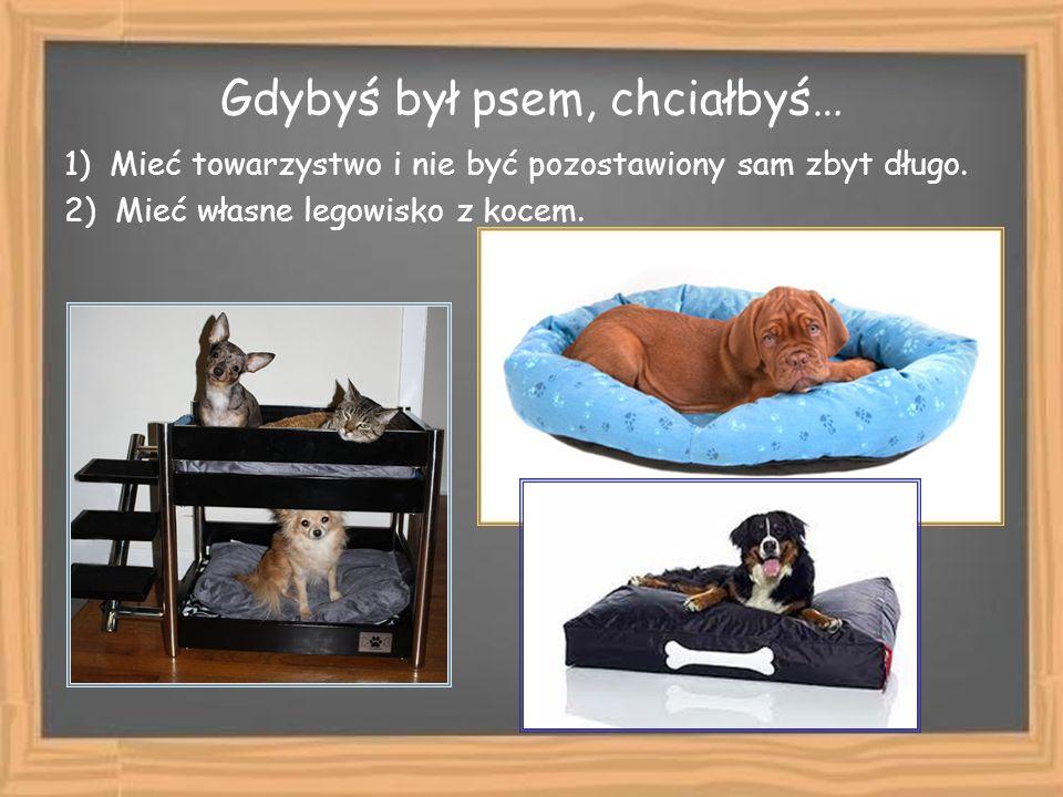 Gdybyś był psem, chciałbyś… 1) Mieć towarzystwo i nie być pozostawiony sam zbyt długo. 2) Mieć własne legowisko z kocem.