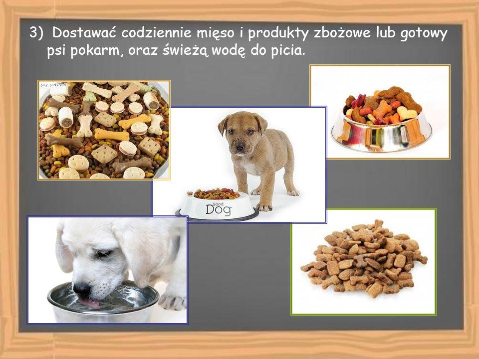3) Dostawać codziennie mięso i produkty zbożowe lub gotowy psi pokarm, oraz świeżą wodę do picia.