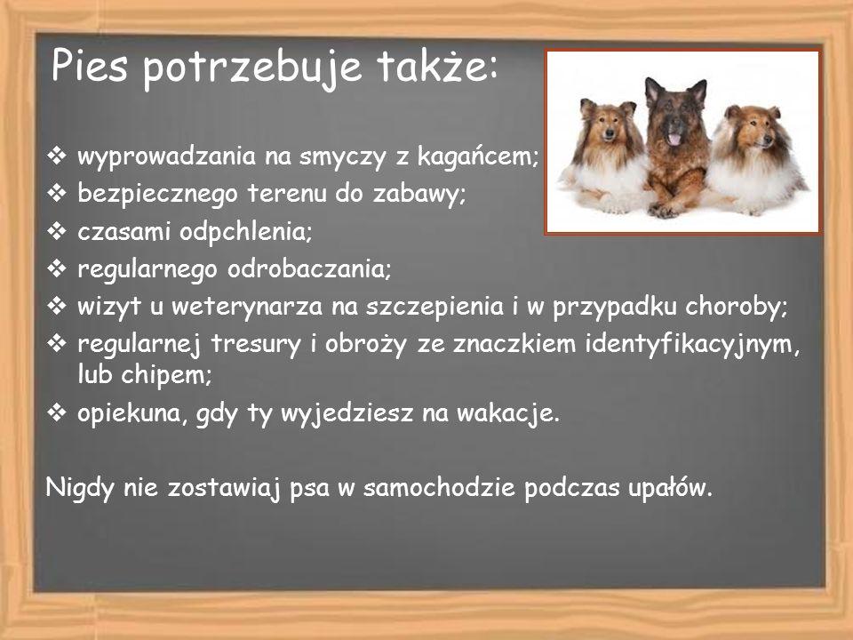 Pies potrzebuje także: wyprowadzania na smyczy z kagańcem; bezpiecznego terenu do zabawy; czasami odpchlenia; regularnego odrobaczania; wizyt u wetery