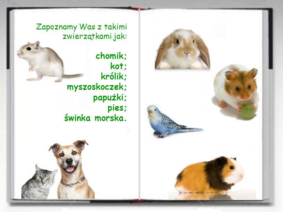 Zapoznamy Was z takimi zwierzątkami jak: chomik; kot; królik; myszoskoczek; papużki; pies; świnka morska.