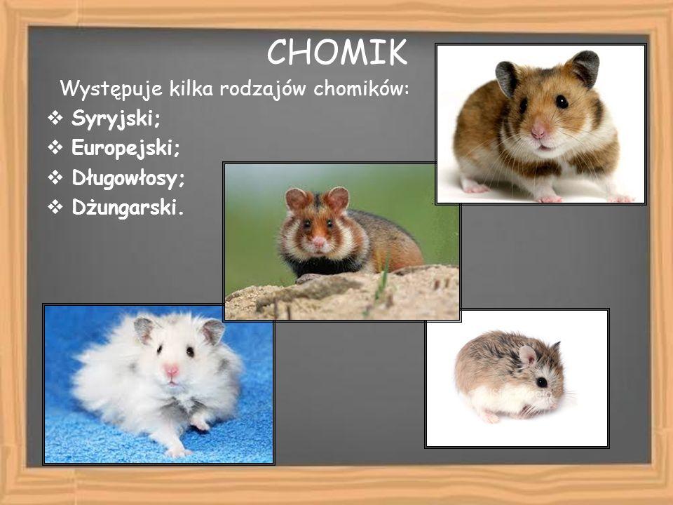 CHOMIK Występuje kilka rodzajów chomików: Syryjski; Europejski; Długowłosy; Dżungarski.