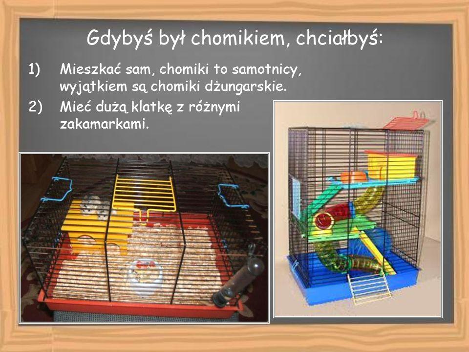 3)Mieć dom utrzymany w czystości i porządku. 4)Mieć w klatce tunele, drabinki oraz zabawki.
