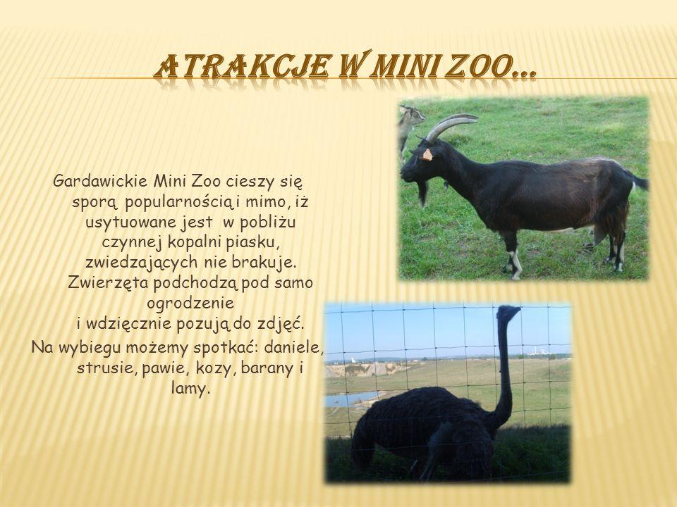 Gardawickie Mini Zoo cieszy się sporą popularnością i mimo, iż usytuowane jest w pobliżu czynnej kopalni piasku, zwiedzających nie brakuje. Zwierzęta