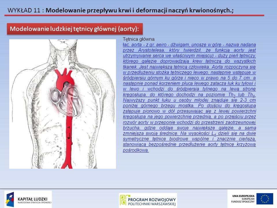 WYKŁAD 11 : Modelowanie przepływu krwi i deformacji naczyń krwionośnych.; Modelowanie ludzkiej tętnicy głównej (aorty): Tętnica główna łac. aorta - z