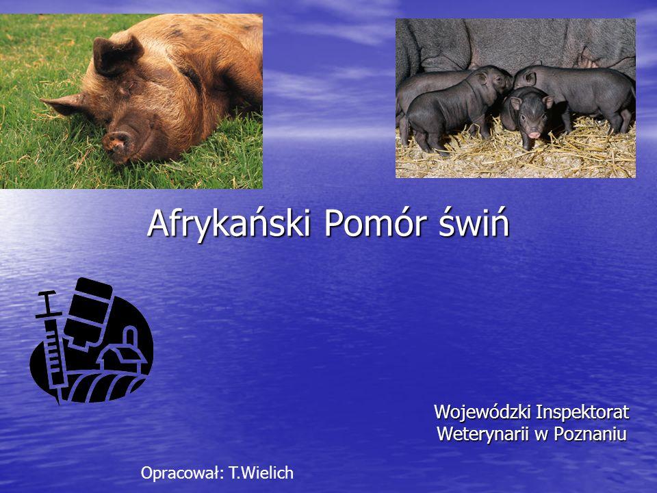 ASF – straty powodowane chorobą Zwierząt chorych nie leczy się, brak szczepionki przeciwko tej chorobie, zwalczana wyłącznie metodami administracyjnymi.