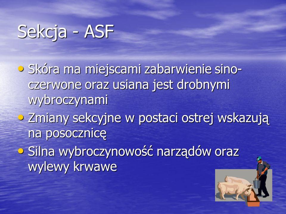 Sekcja - ASF Skóra ma miejscami zabarwienie sino- czerwone oraz usiana jest drobnymi wybroczynami Skóra ma miejscami zabarwienie sino- czerwone oraz u