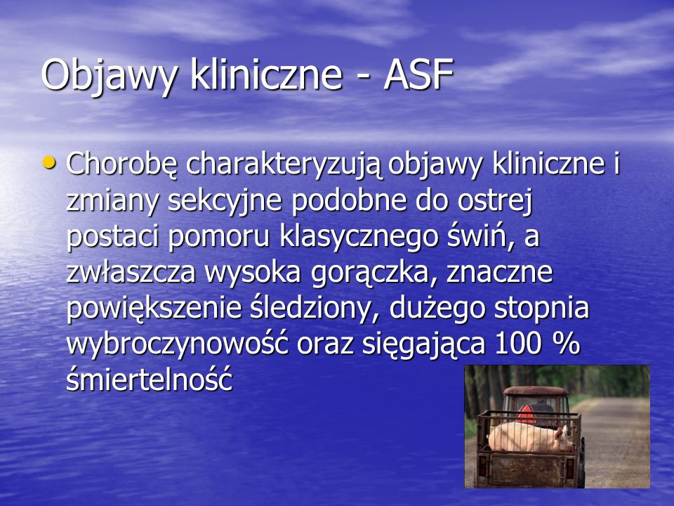Objawy kliniczne - ASF Chorobę charakteryzują objawy kliniczne i zmiany sekcyjne podobne do ostrej postaci pomoru klasycznego świń, a zwłaszcza wysoka