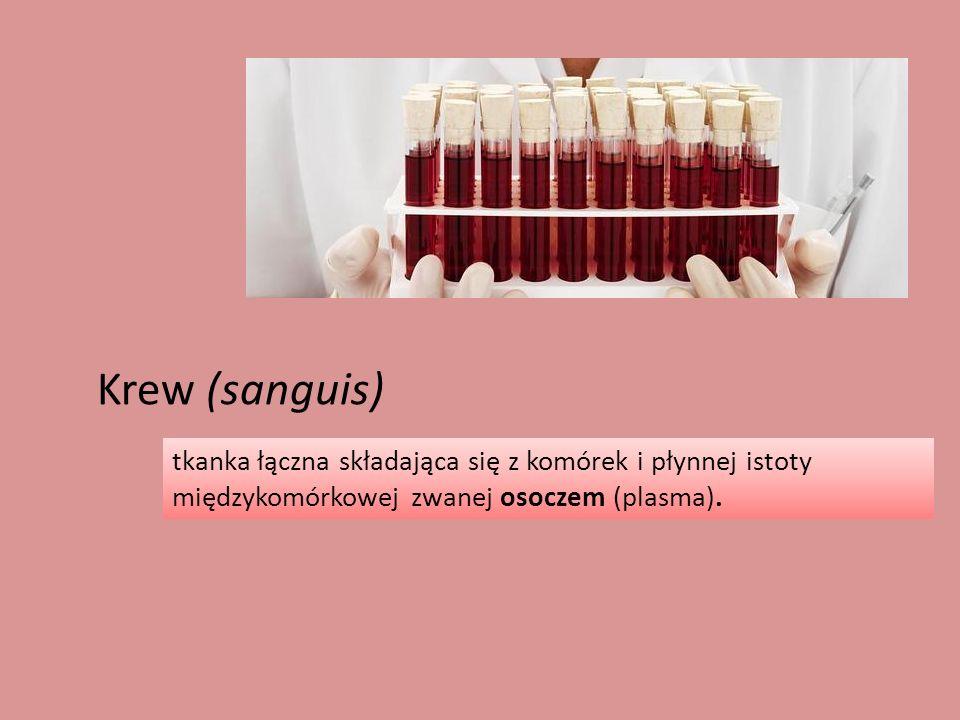 Erytrocyt Płytka krwi Limfocyt