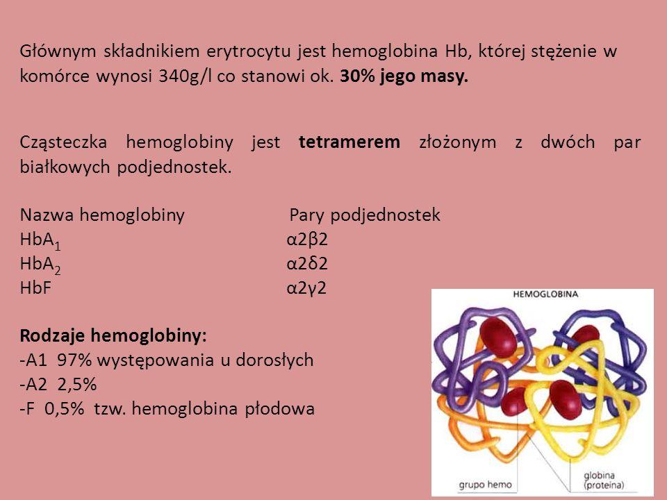 Głównym składnikiem erytrocytu jest hemoglobina Hb, której stężenie w komórce wynosi 340g/l co stanowi ok.