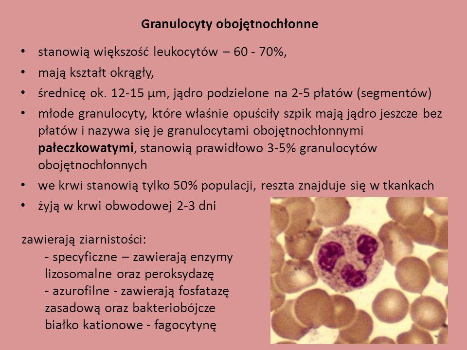 Granulocyty obojętnochłonne stanowią większość leukocytów – 60 - 70%, mają kształt okrągły, średnicę ok. 12-15 µm, jądro podzielone na 2-5 płatów (seg