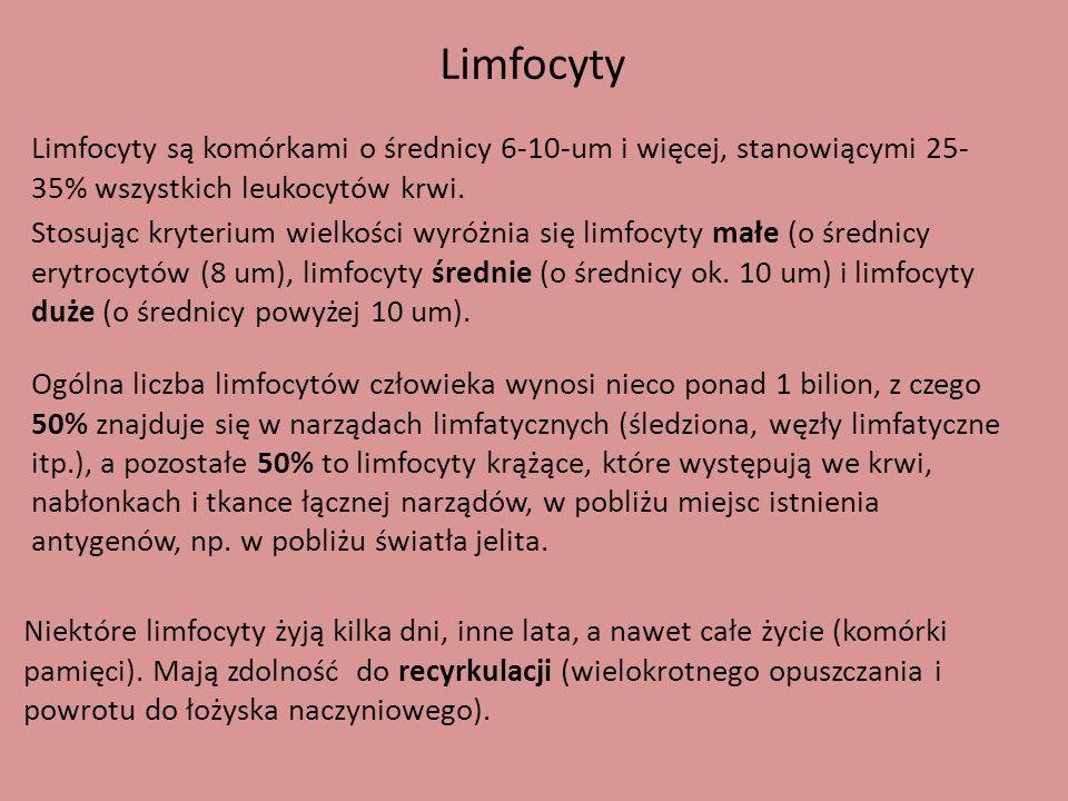 Limfocyty Limfocyty są komórkami o średnicy 6-10-um i więcej, stanowiącymi 25- 35% wszystkich leukocytów krwi. Stosując kryterium wielkości wyróżnia s