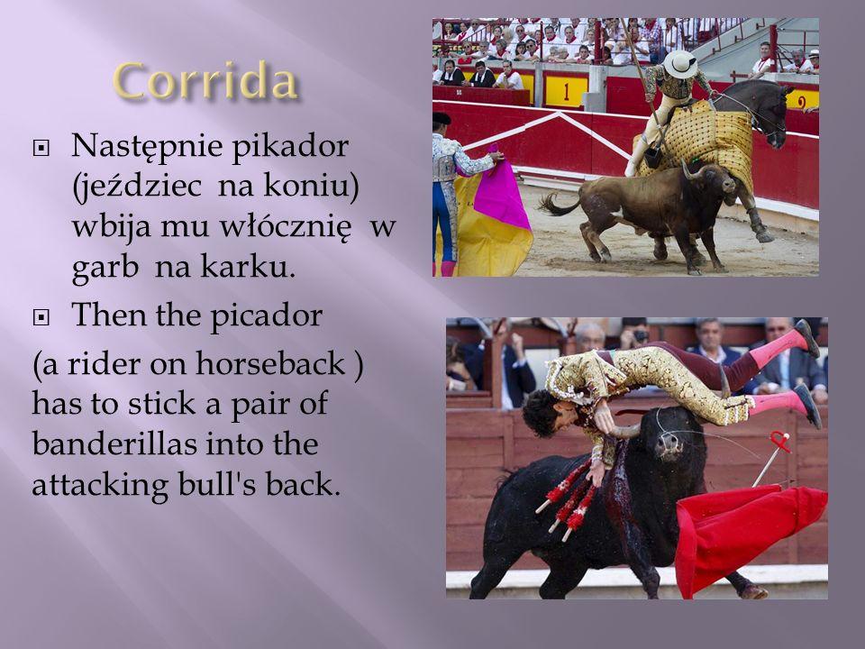 Następnie pikador (jeździec na koniu) wbija mu włócznię w garb na karku. Then the picador (a rider on horseback ) has to stick a pair of banderillas i
