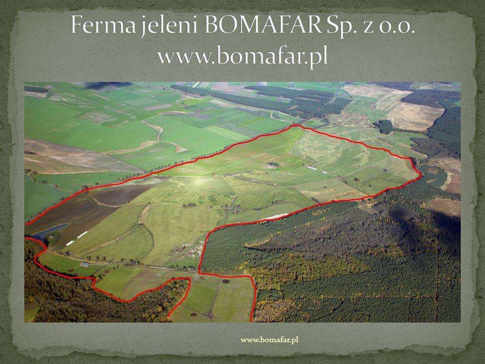 jesteśmy profesjonalną hodowlą jeleni fermowych zajmujemy się również skupem żywych zwierząt (jeleni i danieli), ubojem oraz rozbiorem nasze mięso stanowi podstawę menu w Karczmie Pod Koziorożcami w Trzebiechowie www.bomafar.pl