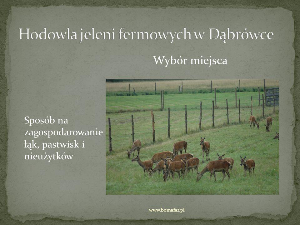 Ogrodzenie mocne bezpieczne dla zwierząt www.bomafar.pl