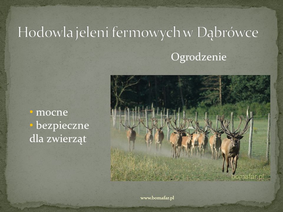 Dokarmianie dobrze utrzymane pastwisko to podstawa prawidłowego żywienia porcja zbóż jako dodatek karmy w pełni zbilansowanej lizawka zimą sianokiszonka www.bomafar.pl