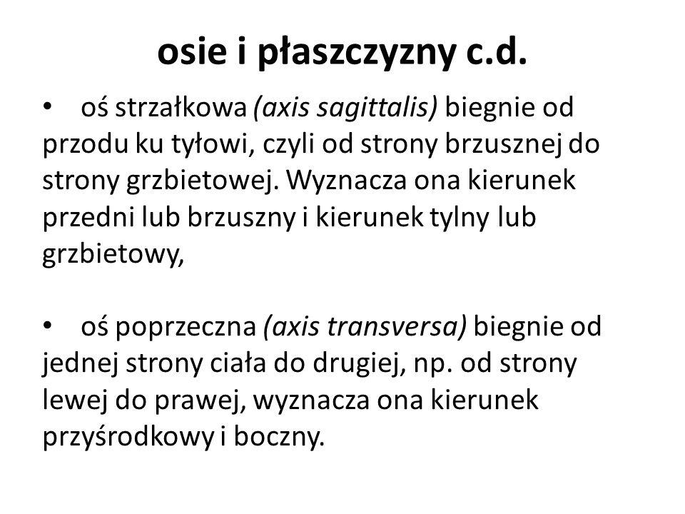 STABILIZACJA POSTAWY c.d.G.