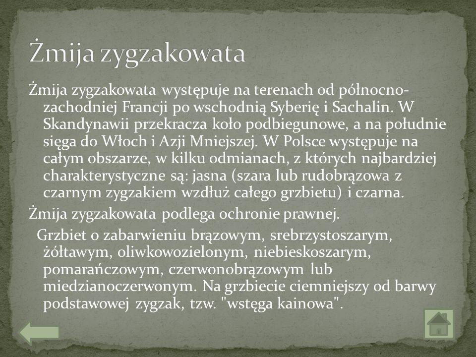 Żmija zygzakowata występuje na terenach od północno- zachodniej Francji po wschodnią Syberię i Sachalin. W Skandynawii przekracza koło podbiegunowe, a