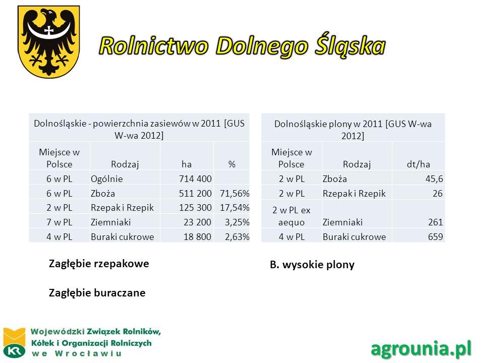 Dolnośląskie - powierzchnia zasiewów w 2011 [GUS W-wa 2012] Miejsce w PolsceRodzajha% 6 w PLOgólnie 714 400 6 w PLZboża 511 20071,56% 2 w PLRzepak i R