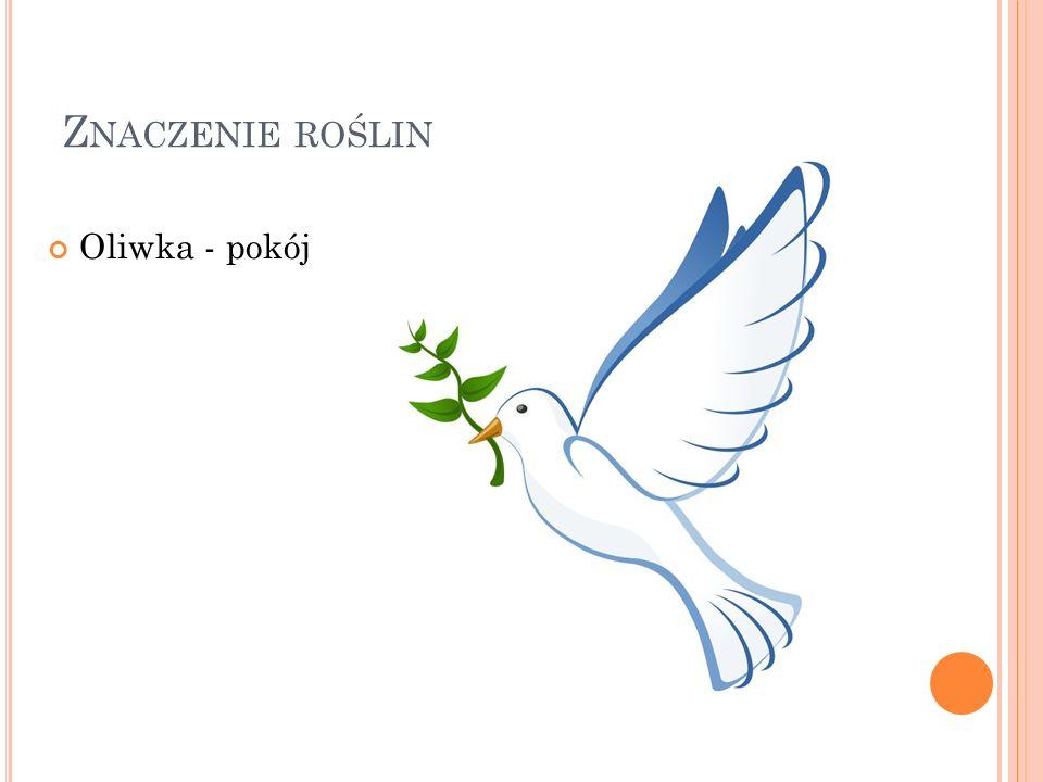 Z NACZENIE ROŚLIN Oliwka - pokój