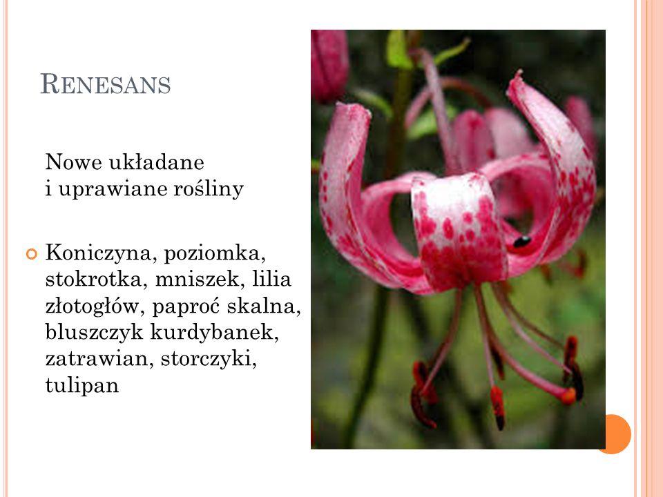 R ENESANS Nowe układane i uprawiane rośliny Koniczyna, poziomka, stokrotka, mniszek, lilia złotogłów, paproć skalna, bluszczyk kurdybanek, zatrawian,