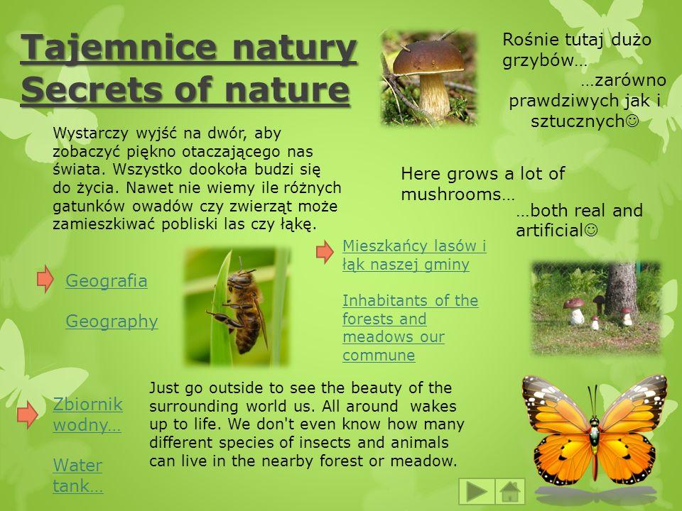 Tajemnice natury Secrets of nature Here grows a lot of mushrooms… …both real and artificial Rośnie tutaj dużo grzybów… …zarówno prawdziwych jak i sztu