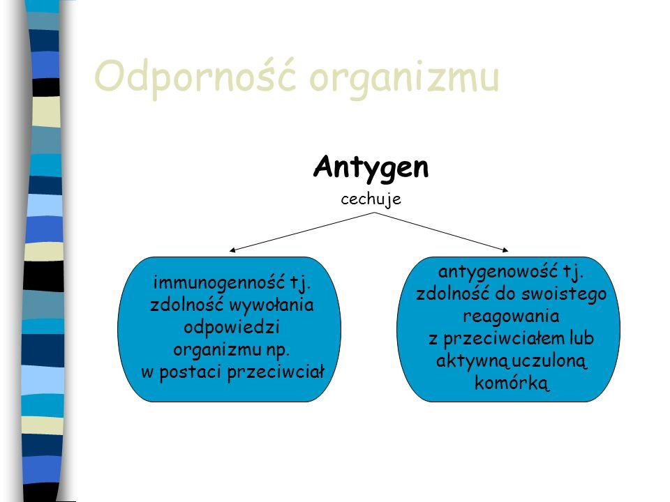 Odporność organizmu Antygen cechuje immunogenność tj. zdolność wywołania odpowiedzi organizmu np. w postaci przeciwciał antygenowość tj. zdolność do s
