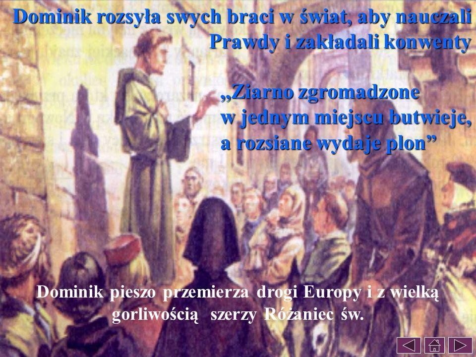 Dominik rozsyła swych braci w świat, aby nauczali Prawdy i zakładali konwenty Dominik pieszo przemierza drogi Europy i z wielką gorliwością szerzy Róż