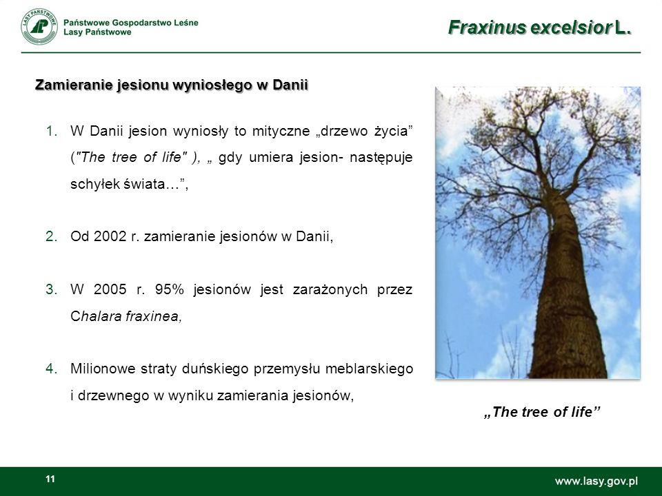 11 Zamieranie jesionu wyniosłego w Danii 1.W Danii jesion wyniosły to mityczne drzewo życia ( The tree of life ), gdy umiera jesion- następuje schyłek świata…, 2.Od 2002 r.