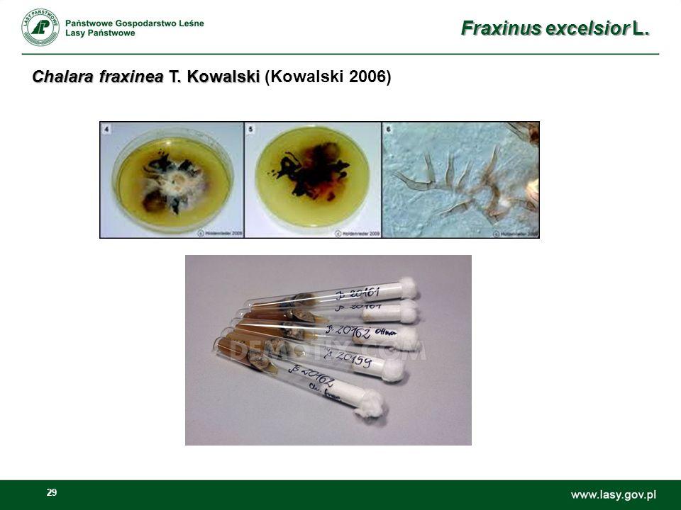 29 Fraxinus excelsior L. Chalara fraxinea T. Kowalski Chalara fraxinea T. Kowalski (Kowalski 2006)
