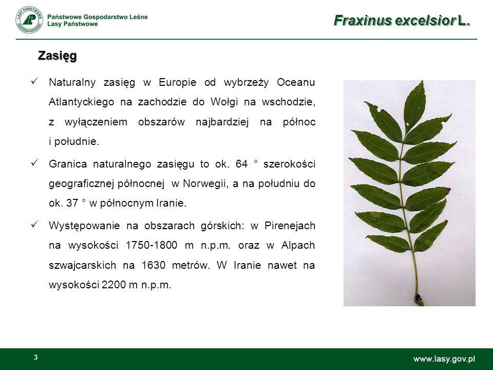 14 Zmiany powierzchni lasów z Js jako gatunkiem panującym [ha] w latach 2001-2011 Zmiany powierzchni lasów z Js jako gatunkiem panującym [ha] w latach 2001-2011 (dane z DGLP, Wydział Urządzania Lasu i Geoinformatyki, luty 2013 r.) Fraxinus excelsior L.