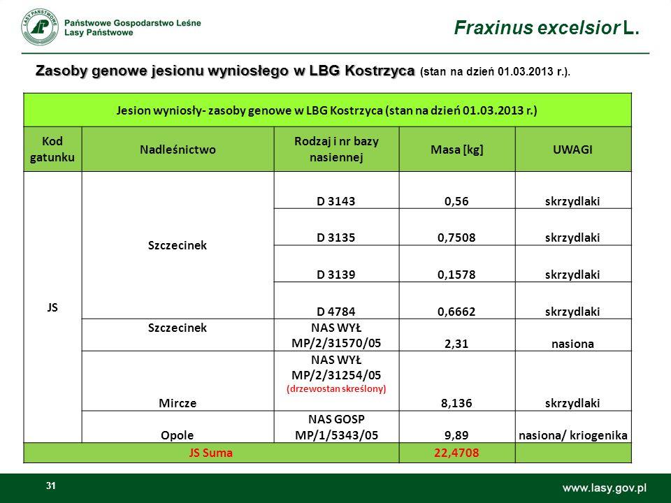31 Zasoby genowe jesionu wyniosłego w LBG Kostrzyca Zasoby genowe jesionu wyniosłego w LBG Kostrzyca (stan na dzień 01.03.2013 r.).