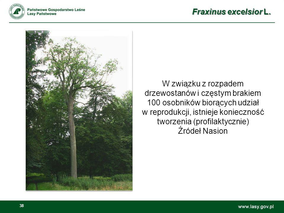 38 W związku z rozpadem drzewostanów i częstym brakiem 100 osobników biorących udział w reprodukcji, istnieje konieczność tworzenia (profilaktycznie) Źródeł Nasion Fraxinus excelsior L.