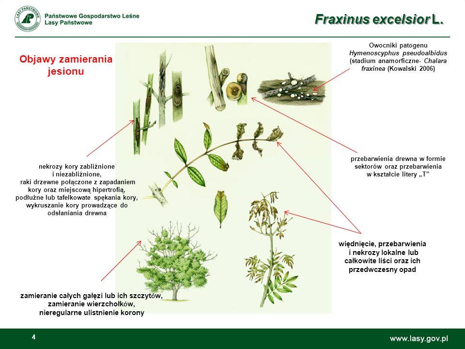 35 Działania wspierające opracowanie strategii ochrony gatunku F.