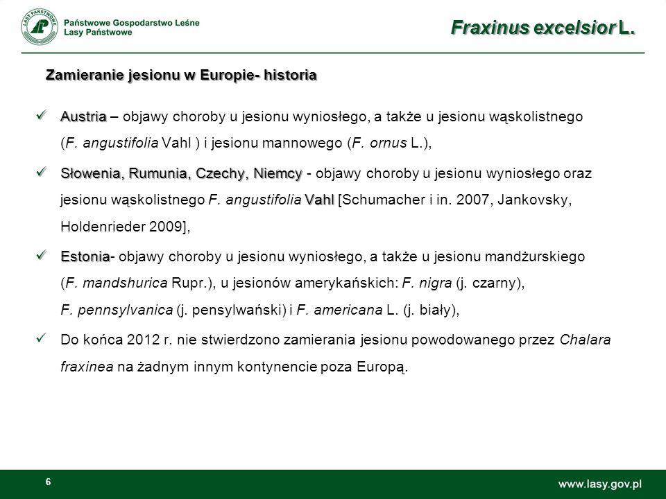 17 Zmiany miąższości jesionu wyniosłego jako gatunku panującego [m3] Fraxinus excelsior L.