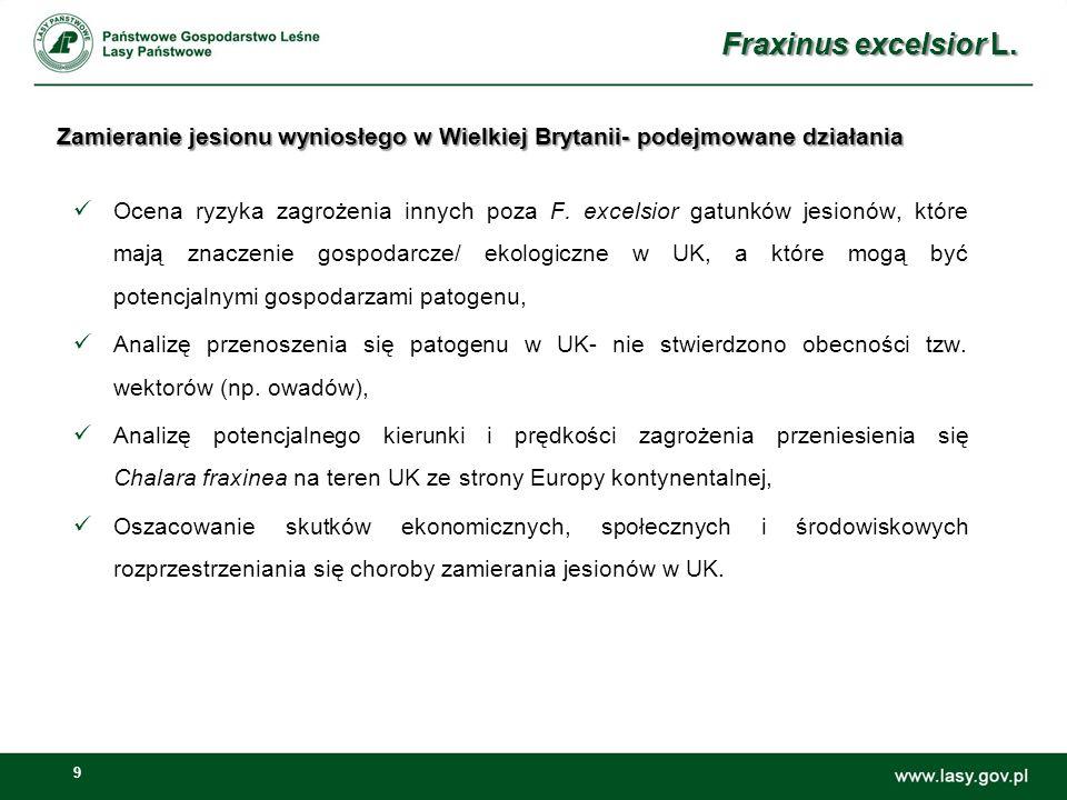 9 Zamieranie jesionu wyniosłego w Wielkiej Brytanii- podejmowane działania Ocena ryzyka zagrożenia innych poza F. excelsior gatunków jesionów, które m