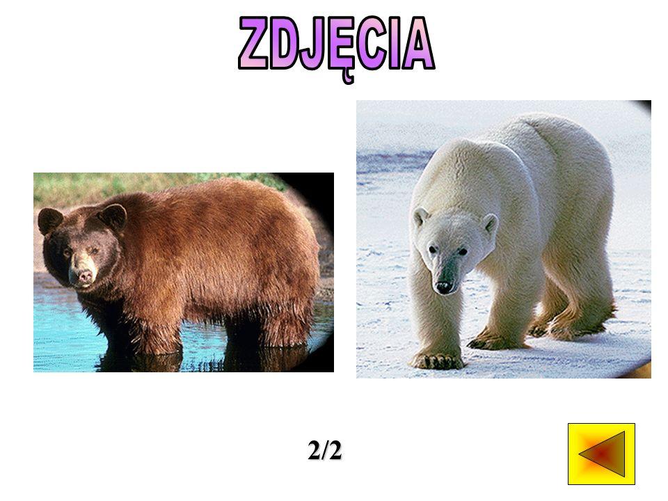 Trzy z czterech mniejszych gatunków niedźwiedzi żyją na południu Azji.