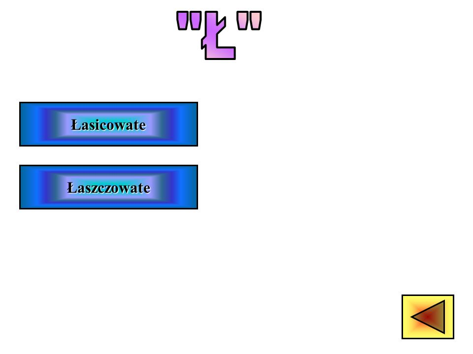 Lemurowate Leniwce Lorisowate