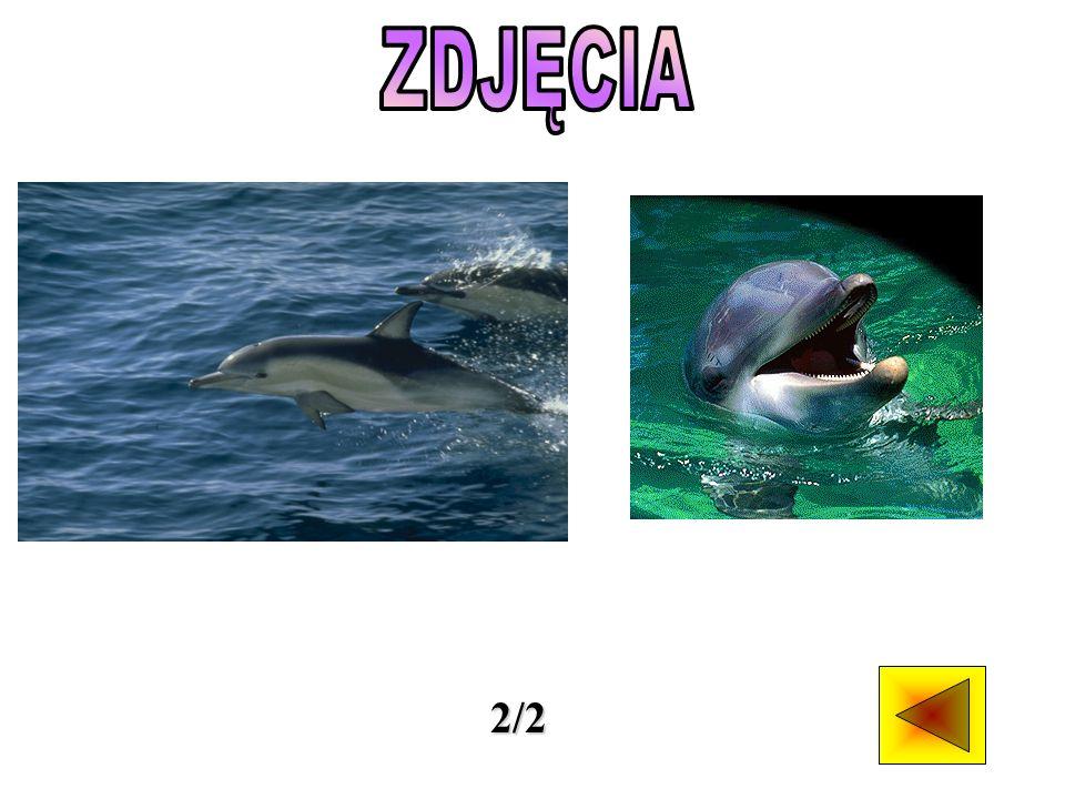 Delfiny to nazwa nadawana niewielkim wielorybom z podrzędu zębowców i dwóch rodzin: delfinowatych oraz delfinów słodkowodnych. Występują w oceanach ca