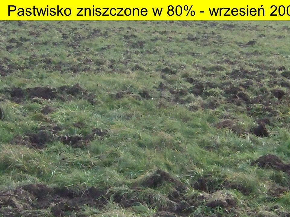 4 Pastwisko zniszczone w 80% - wrzesień 2007