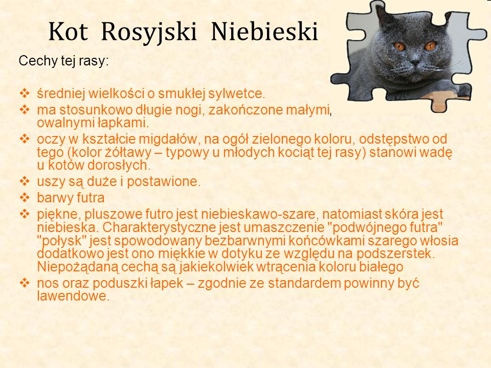 Kot Rosyjski Niebieski Cechy tej rasy: średniej wielkości o smukłej sylwetce. ma stosunkowo długie nogi, zakończone małymi owalnymi łapkami. oczy w ks