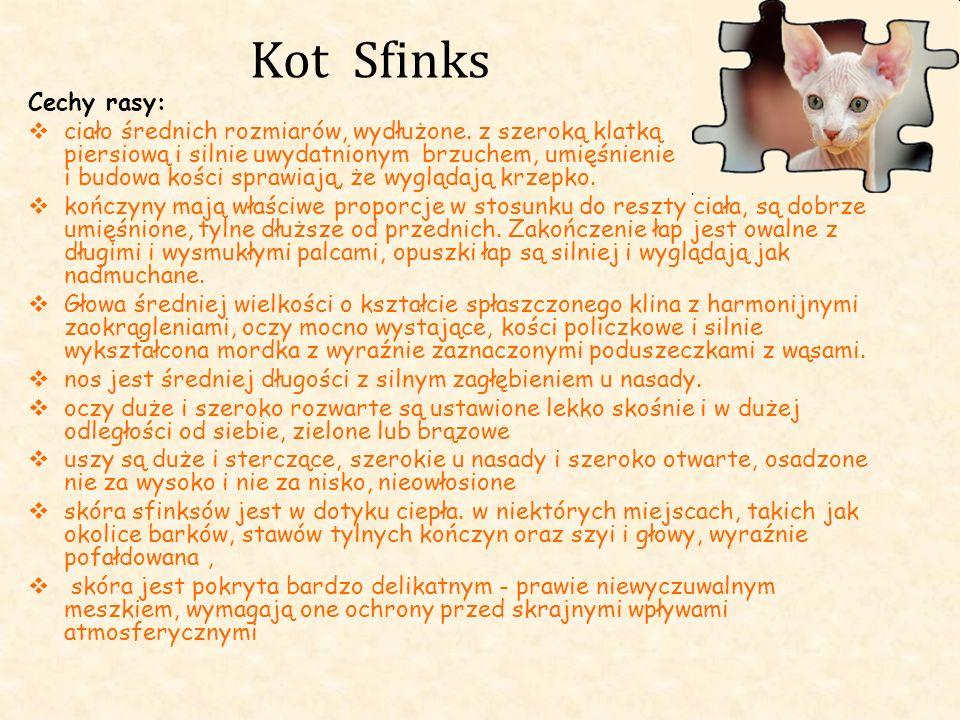 Kot Sfinks Cechy rasy: ciało średnich rozmiarów, wydłużone. z szeroką klatką piersiową i silnie uwydatnionym brzuchem, umięśnienie i budowa kości spra