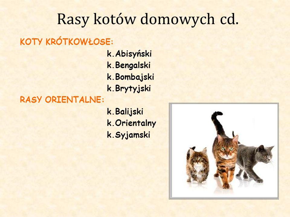 Rasy kotów domowych cd. KOTY KRÓTKOWŁOSE: k.Abisyński k.Bengalski k.Bombajski k.Brytyjski RASY ORIENTALNE: k.Balijski k.Orientalny k.Syjamski