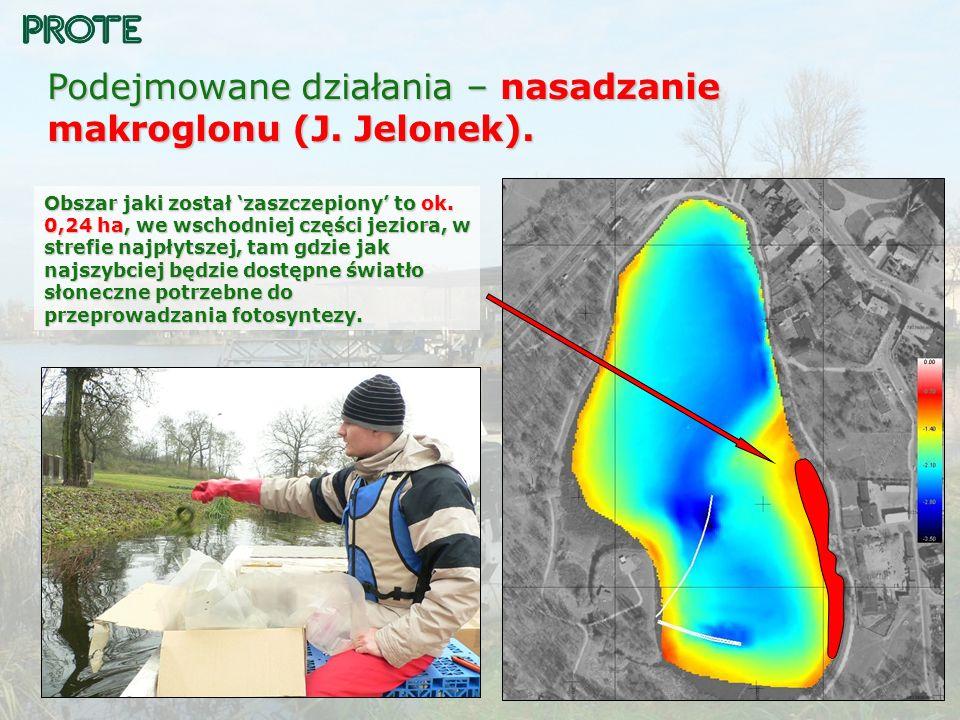 Podejmowane działania – nasadzanie makroglonu (J. Jelonek). Obszar jaki został zaszczepiony to ok. 0,24 ha, we wschodniej części jeziora, w strefie na